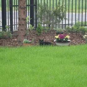 Nowy kawałek ogrodu.