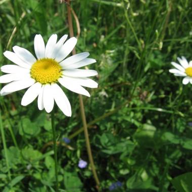 najwięcej mamy takich kwiatków :)