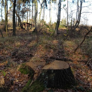... był wiosną, latem, jeszcze na początku jesieni...a w listopadzie moje trasy spacerowe wyglądają tak. Lasy wołają  o pomoc, nie chcą zostać tylko na fotografiach.