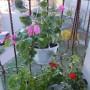 Salon, Wiosny ciąg dalszy...... ZAPRASZAM :) - Mój mały balkonik