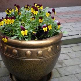Mój ogródeczek - przyroda zaczynająca budzić się do życia...