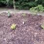 Ogród, Ogród wiosną... - Wszystko posadzone niech teraz szybko rośnie
