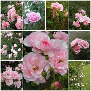 Różowa galeria
