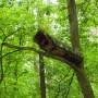 Pozostałe, Arboretum w Gołuchowie - Park i zabudowania cz 1 - Gołuchów  Zagroda dla zwierząt