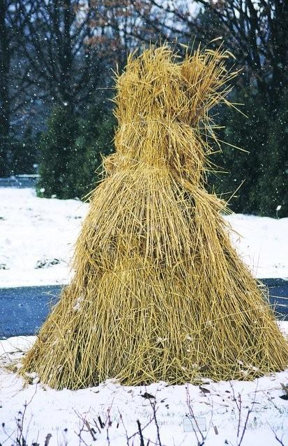 Pozostałe, W co ubrać iglaka na zimę??????