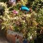 Ogród, Nieśmiała jeszcze jesień - te potwory miały by w paprociach, ale paprocie zwiędły