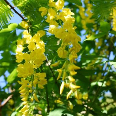 Majowy ogród wabi zapachem kwiatów, kolorami i śpiewem ptaków. Zapraszam do sielskiegodomkuwdolinie.