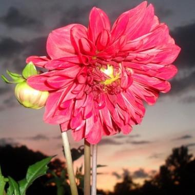 Oto moje kwiaty