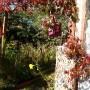 Ogród, Nieśmiała jeszcze jesień