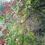 Rośliny, Wrześniowe fotki.................... - .................i dzika róża....................