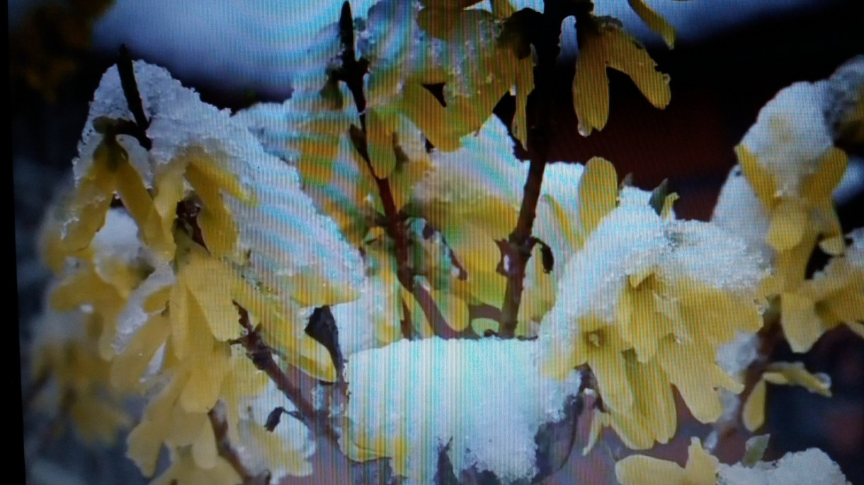 Ogród, Ach ta wiosna..........