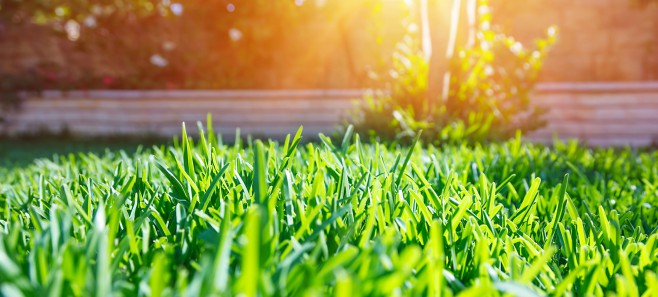 Piękny trawnik przez cały rok