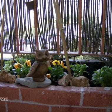 Kwitnący balkonik&#x3B;-)