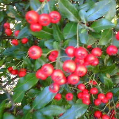 Jesień to mieszanka kolorów, zapachów....