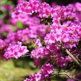 Westerham - zaczarowana strona ogrodu :)