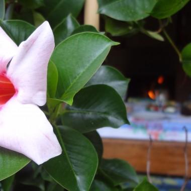 W moim ogrodzie czuć już jesień. Korzystając z jeszcze ciepłych dni zapraszam do wspólnego biesiadowania:)