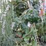 Rośliny, zapachy lata