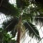 Rośliny, Dla tęskniących za zielenią i ciepłem
