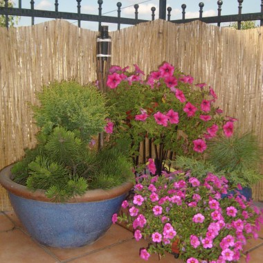 ogród, taras