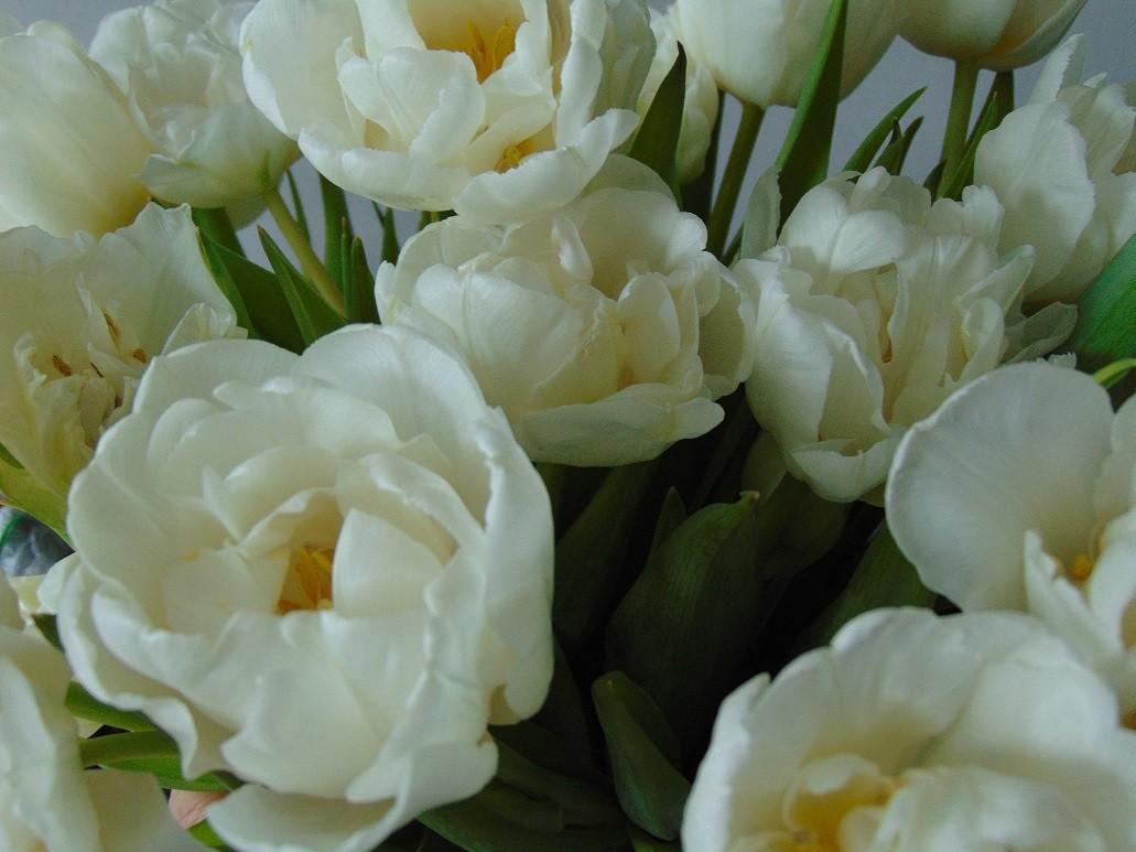 Pozostałe, Wiosennie............ - ...................i tulipany...............