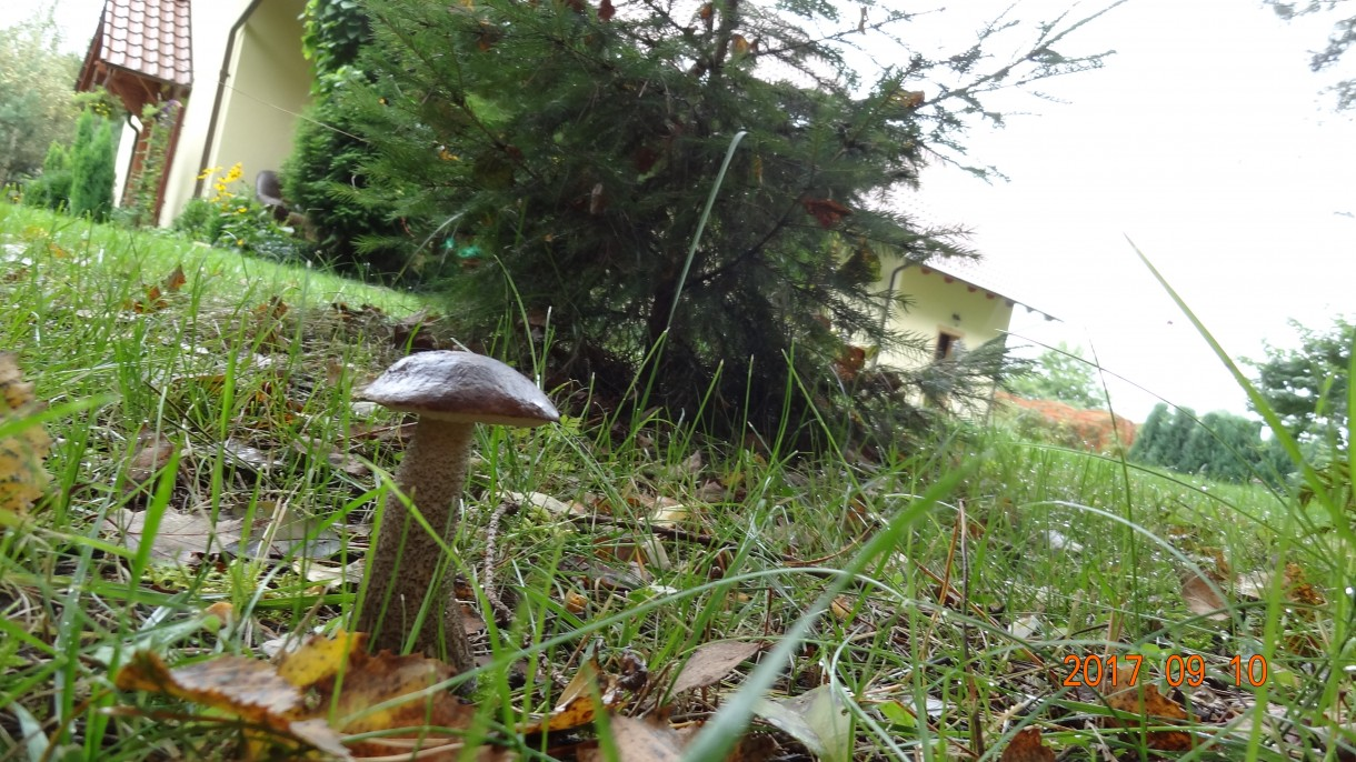Pozostałe, Jesień w moim ogrodzie/tarasie
