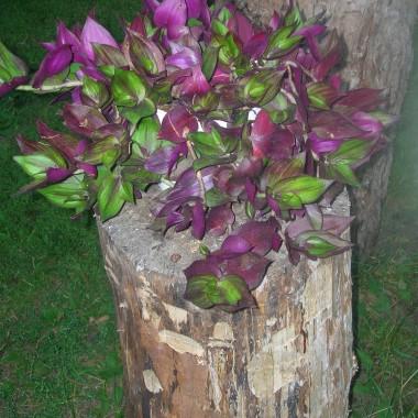 Kwiaty i nie tylko