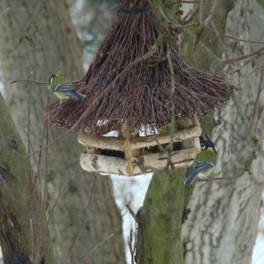 Ptaszki zimą...