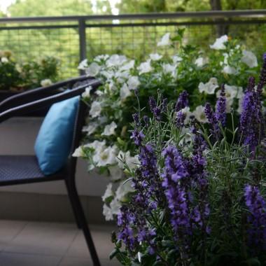 """A na balkonie znowu zmiany. Jest pięknie, wakacyjnie, słonecznie więc postanowiłam zmienić troszkę kolorystykę na balkonie. Dzięki lawendzie i szałwii zrobiło się """"niebiesko""""...."""