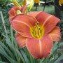 Rośliny, natura - rośliny z mojego ogrodu
