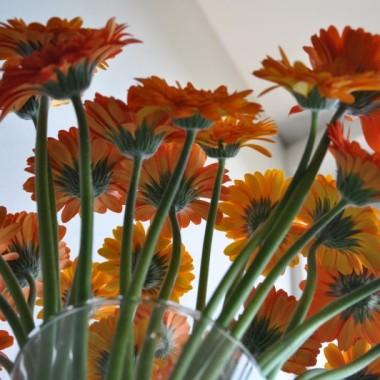 ...co nieco dekoracji z wynajmowanego mieszkanka &#x3B;-))) aby żyło się przyjemniej!!!oraz niespodziewane gerberki od ukochanego mężczyzny &#x3B;D