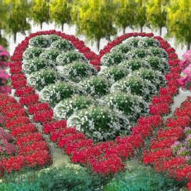 Wesołe projekty ogrodów
