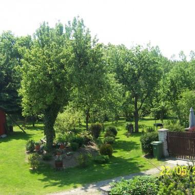 moje roślinki 2011
