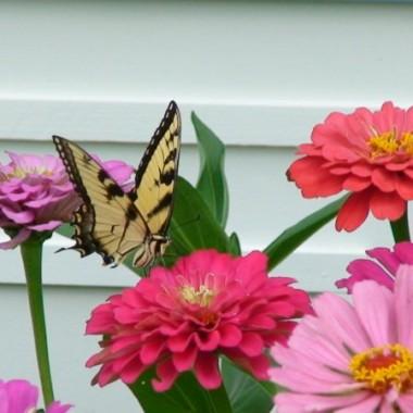 Motylek i kwiatki!
