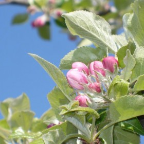 W maju jak w gaju................czyli wiosenne wariacje w parku