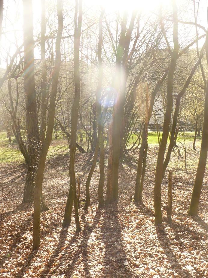 Dekoratorzy, Czekając na wiosnę .................. - ...............i las pełen słońca................