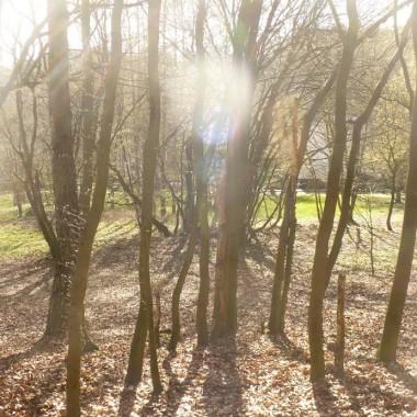 ...............i las pełen słońca................