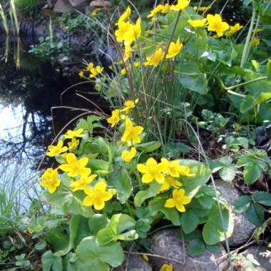Ogródek na wiosnę