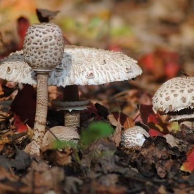 ....no a w lasku bajeczne grzyby :)