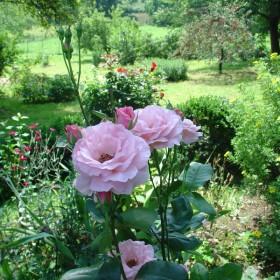 Ogród Cioci Ludki