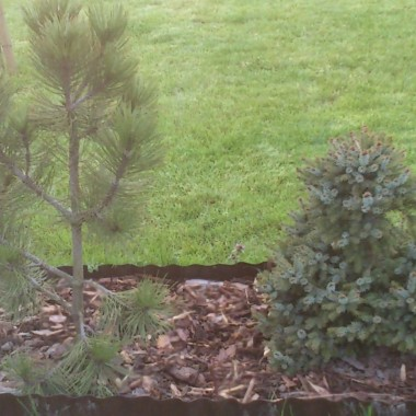 Moja działeczka wiosna 2012