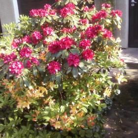Ogród i rośliny ozdobne