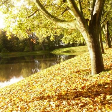 ..............i jesienny  staw w słońcu................