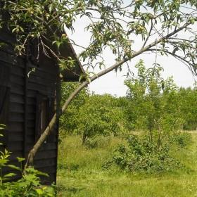 Taki sobie letni domek na wsi .....