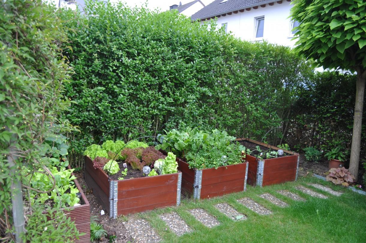 Ogród, Ogrod - Skrzyneczki zlikwidowalam w tym roku , bedziemy stawiac tam maly bialo- szary domek