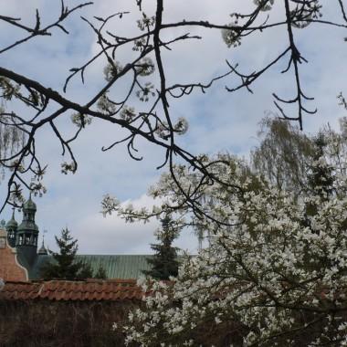 ..........i magnolia kłania się nisko.............