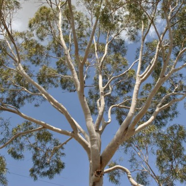 Drzewo do przytulania