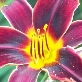 Moje Ulubione Kwiaty