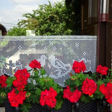 Miało nie być na razie ogródkowej galerii, ale... wszystko tak rośnie, kolory nowe, zioła na murku pod tarasem i truskawki. Własne. Pierwsze zbiory z niecałych 2m kwadratowych. Za oknem czerwone czereśnie sąsiadów. Smakowity widok. Zapraszam.