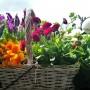 Dekoratorzy, Majowe robótki.................. - ................i kwiatki..............