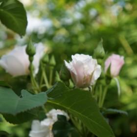 Kwiaty w moim letnim ogrodzie